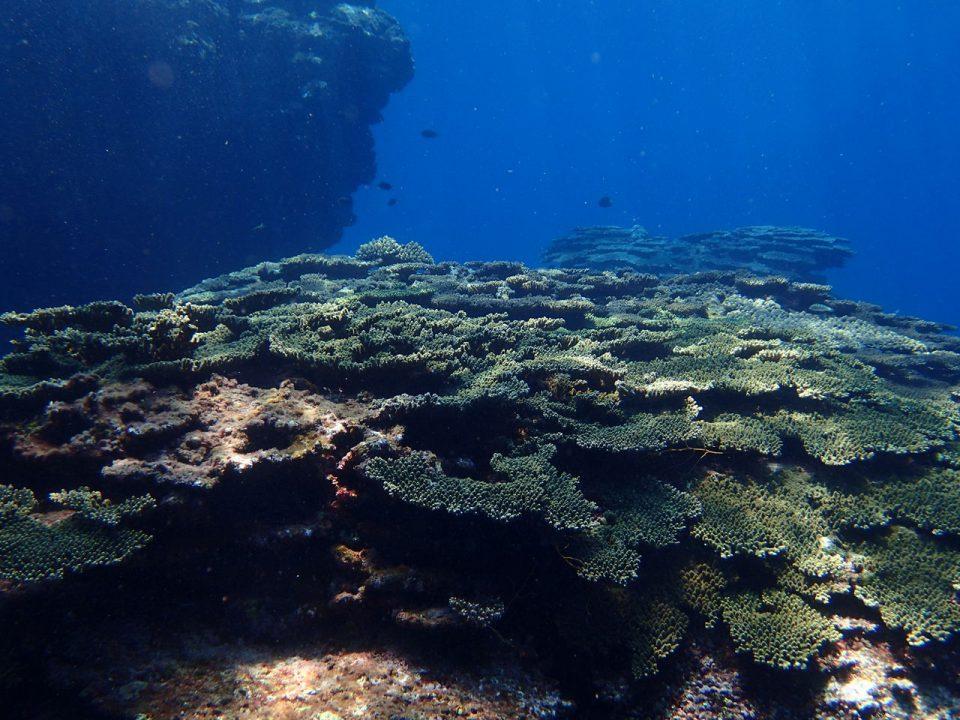 喜界島の海003
