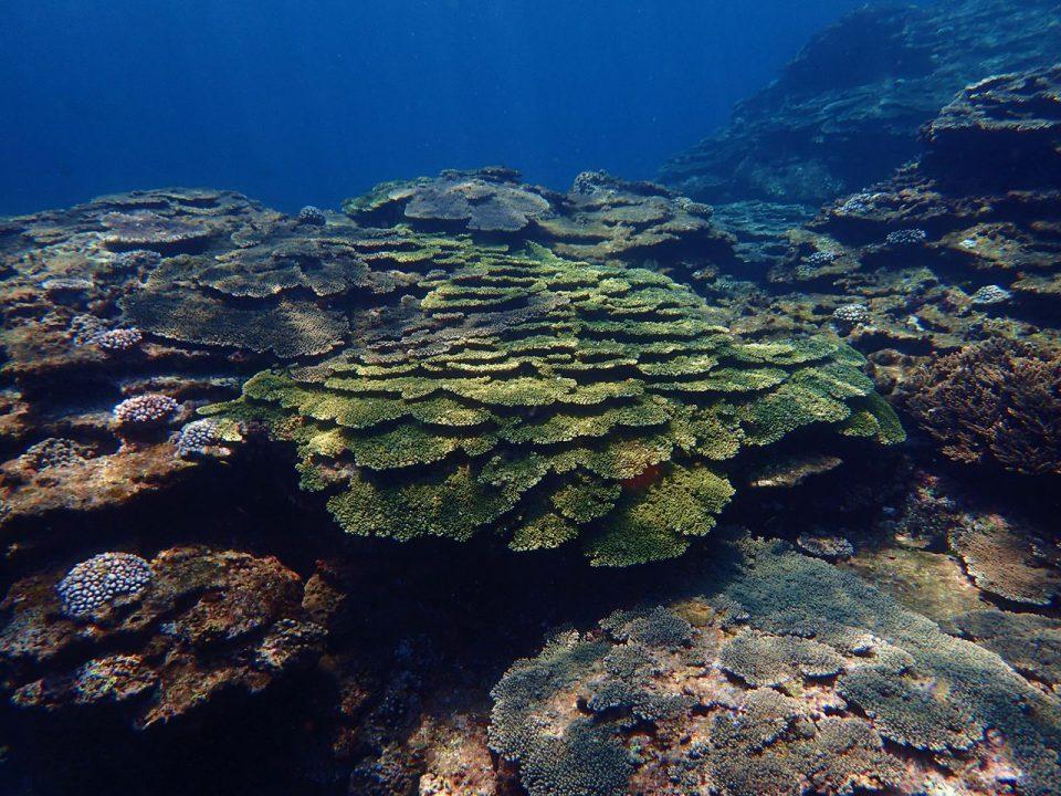 喜界島の海004