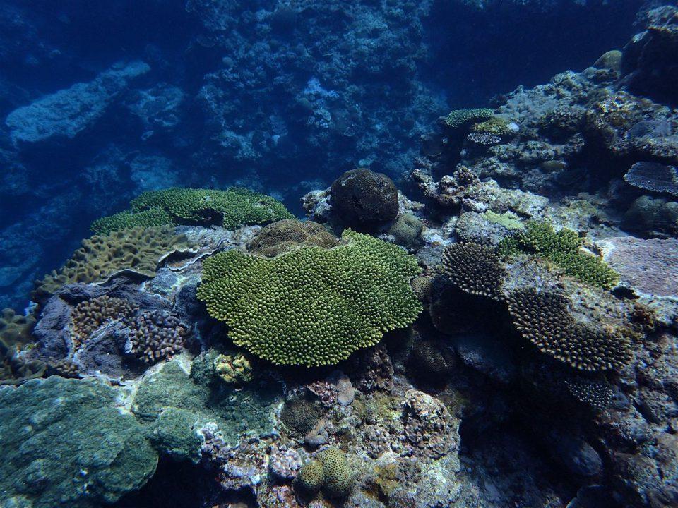 喜界島の海005