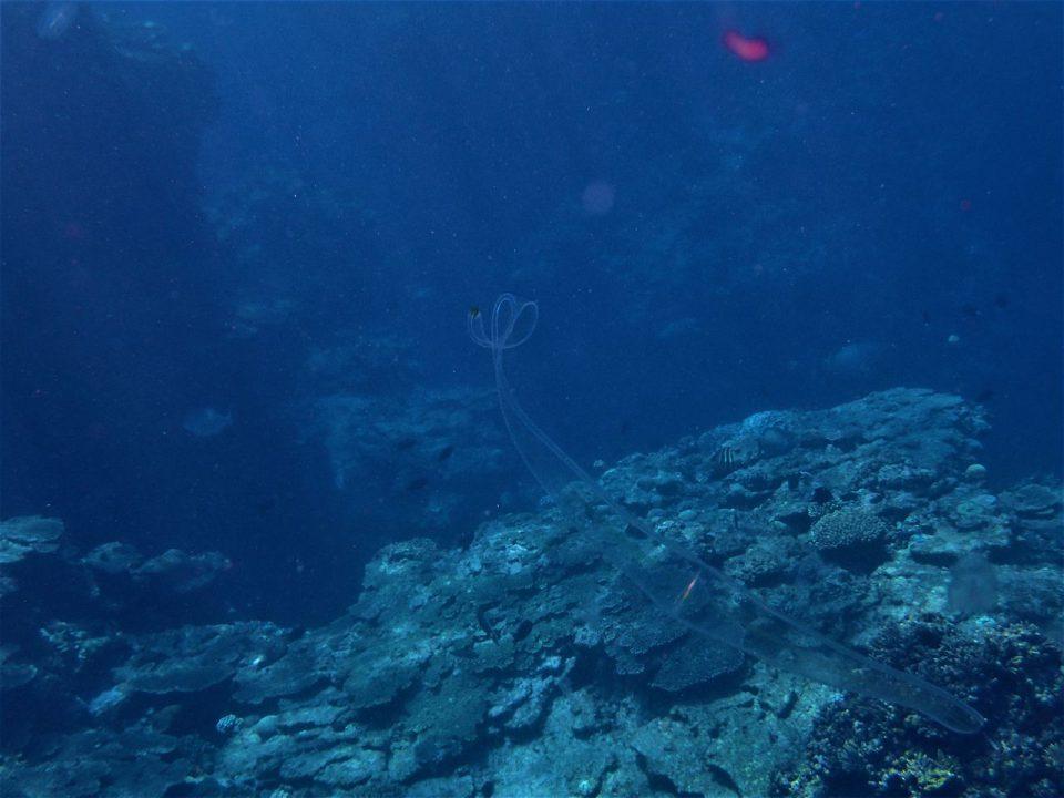 喜界島の海の中006