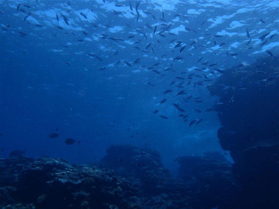 喜界島の海の中007