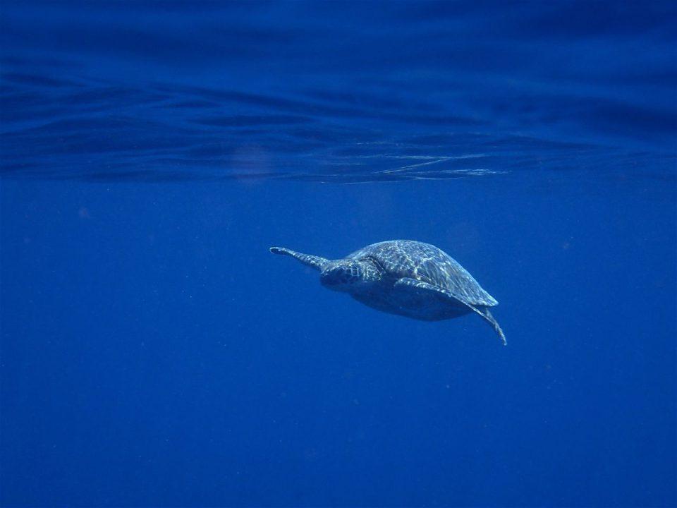 喜界島の海の中008