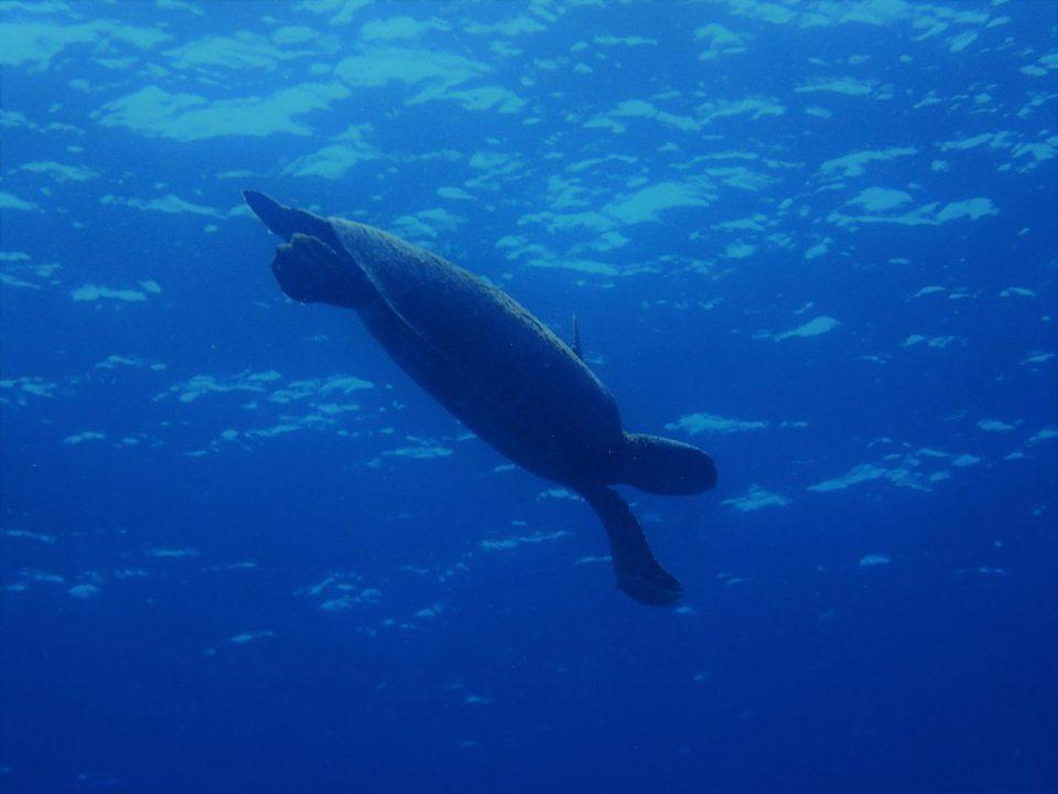 喜界島の海の中011