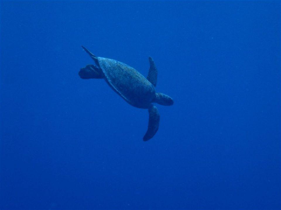 喜界島の海の中012
