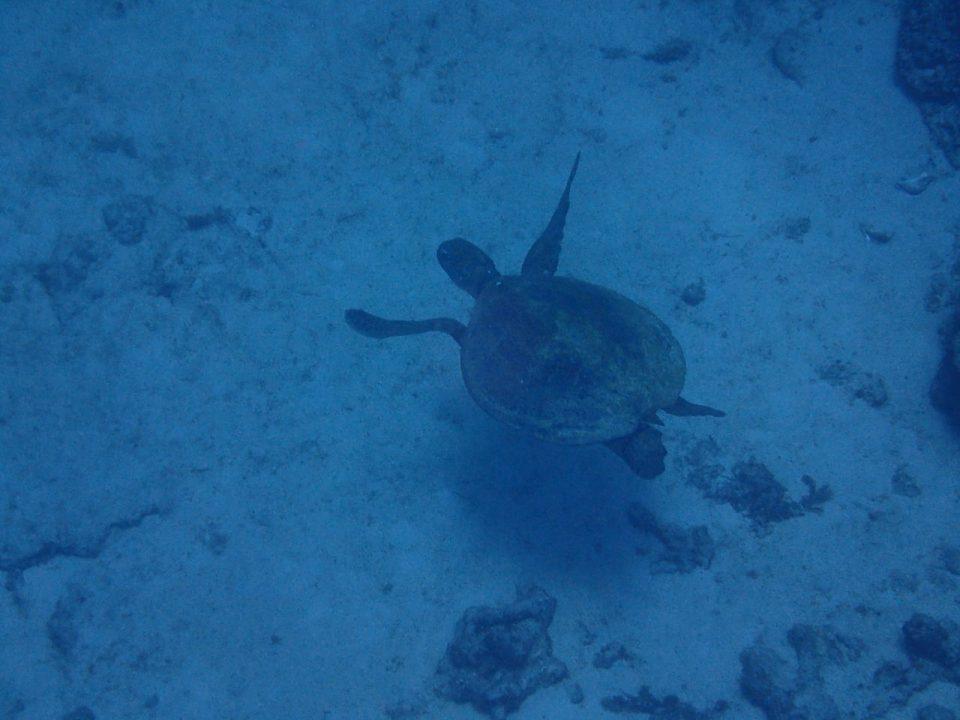 喜界島の海の中013