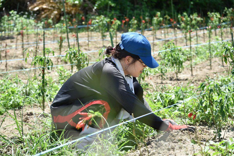 農業体験の様子002